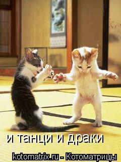 Котоматрица: и танци и драки