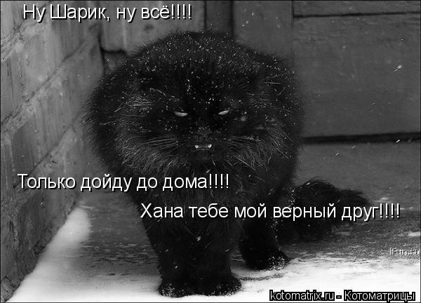 Котоматрица: Ну Шарик, ну всё!!!! Только дойду до дома!!!!  Хана тебе мой верный друг!!!!