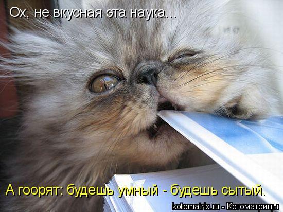 Котоматрица: Ох, не вкусная эта наука... А гоорят: будешь умный - будешь сытый.