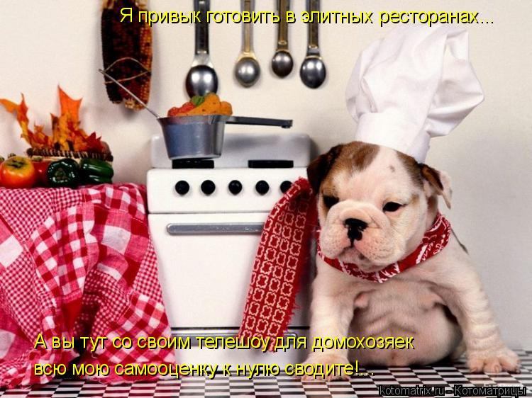 Котоматрица: Я привык готовить в элитных ресторанах... А вы тут со своим телешоу для домохозяек всю мою самооценку к нулю сводите!...