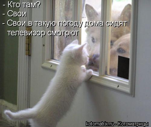 Котоматрица: - Кто там? - Свои - Свои в такую погоду дома сидят телевизор смотрют