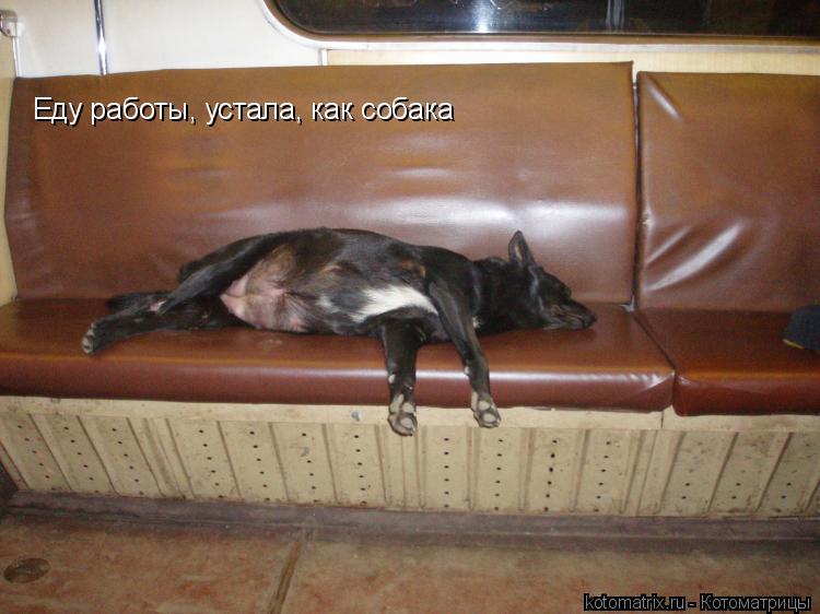 Котоматрица: Еду работы, устала, как собака