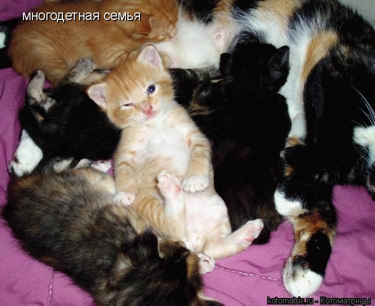 Котоматрица: многодетная семья