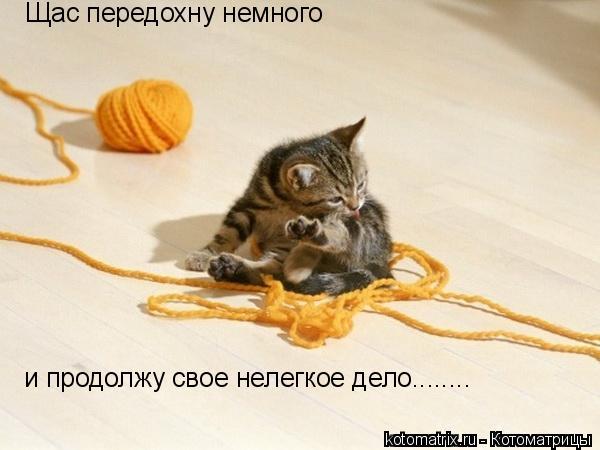 Котоматрица: Щас передохну немного и продолжу свое нелегкое дело........