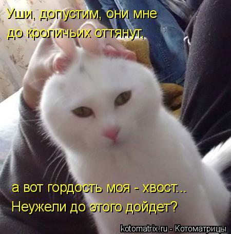Котоматрица: Уши, допустим, они мне до кроличьих оттянут, а вот гордость моя - хвост... Неужели до этого дойдет?