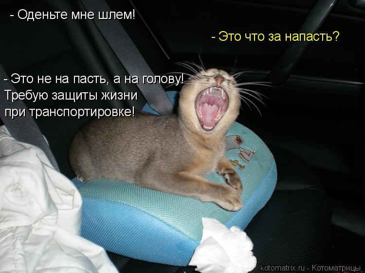 Котоматрица: - Оденьте мне шлем! - Это не на пасть, а на голову! - Это что за напасть? Требую защиты жизни при транспортировке!