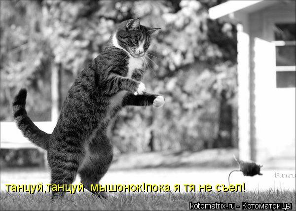 Котоматрица: танцуй,танцуй  мышонок!пока я тя не съел!