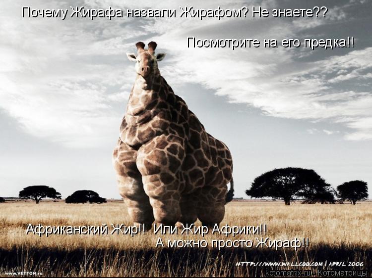 Котоматрица: Посмотрите на его предка!! Почему Жирафа назвали Жирафом? Не знаете?? Африканский Жир!!  Или Жир Африки!! А можно просто Жираф!!