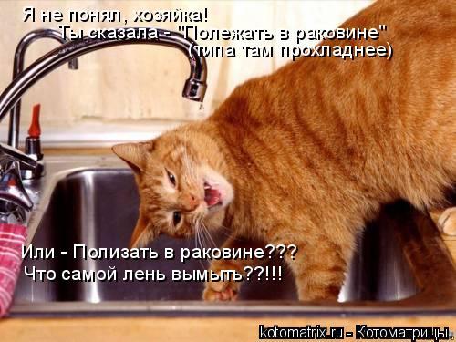 """Котоматрица: Я не понял, хозяйка!  Ты сказала - """"Полежать в раковине"""" (типа там прохладнее) Или - Полизать в раковине??? Что самой лень вымыть??!!!"""