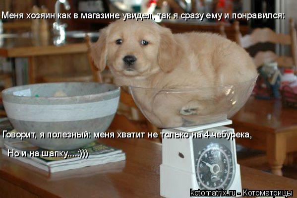 Котоматрица: Меня хозяин как в магазине увидел, так я сразу ему и понравился: Говорит, я полезный: меня хватит не только на 4 чебурека, Но и на шапку....:)))
