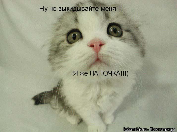 Котоматрица: -Ну не выкидывайте меня!!! -Я же ЛАПОЧКА!!!)