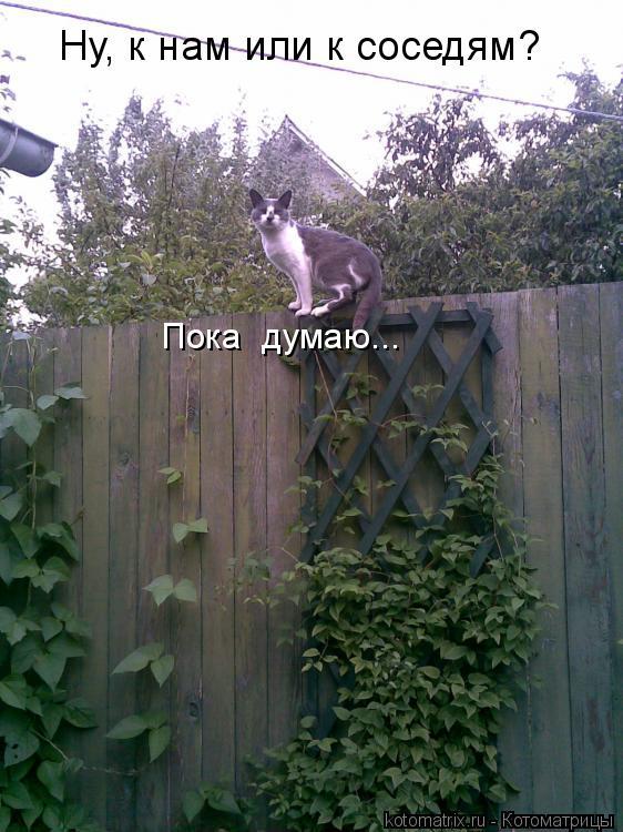 Котоматрица: Ну, к нам или к соседям? Пока  думаю...