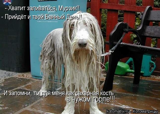 Котоматрица: - Хватит заливаться, Мурзик!!  - Прийдёт и твой Банный День!! И запомни, ты для меня как сахарная кость в чужом горле!!!