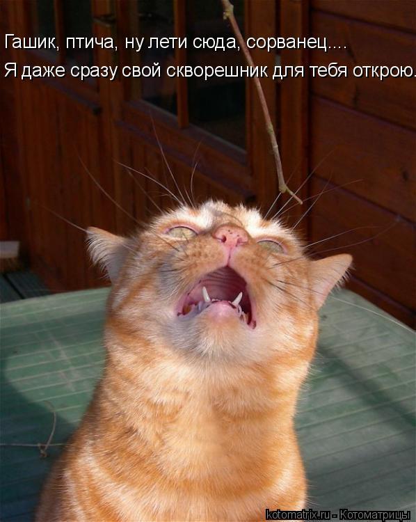 Котоматрица: Гашик, птича, ну лети сюда, сорванец.... Я даже сразу свой скворешник для тебя открою..