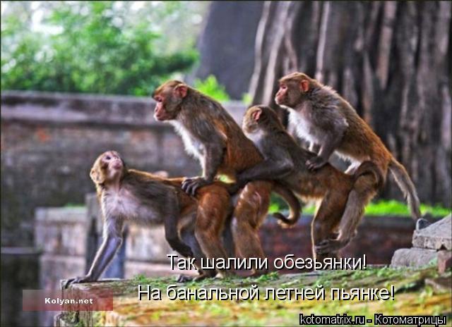 Котоматрица: Так шалили обезьянки! На банальной летней пьянке!