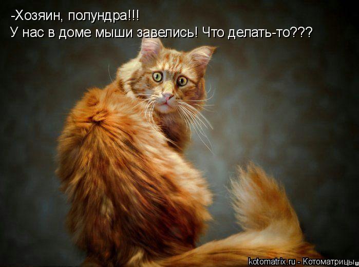 Котоматрица: -Хозяин, полундра!!! У нас в доме мыши завелись! Что делать-то???