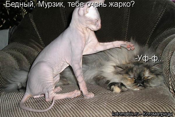 Котоматрица: -Бедный, Мурзик, тебе очень жарко?  -Уф-ф...