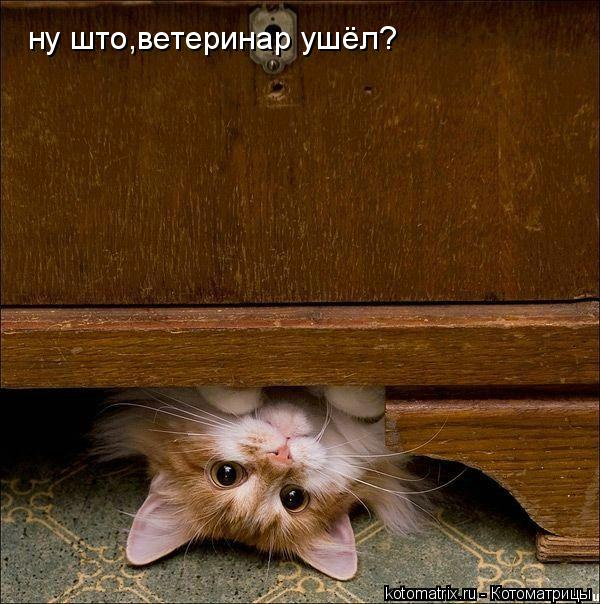 Котоматрица: ну што,ветеринар ушёл?