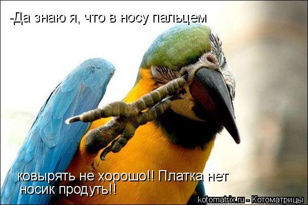 Котоматрица: -Да знаю я, что в носу пальцем ковырять не хорошо!! Платка нет носик продуть!!