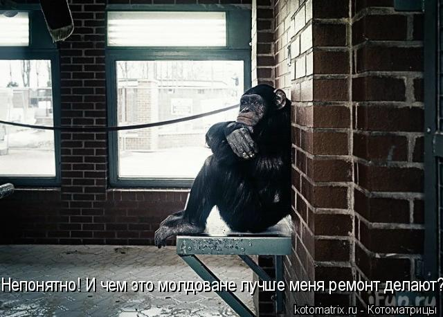 Котоматрица: Непонятно! И чем это молдоване лучше меня ремонт делают?!