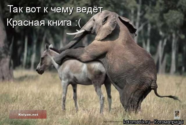 Котоматрица: Так вот к чему ведёт  Красная книга :(