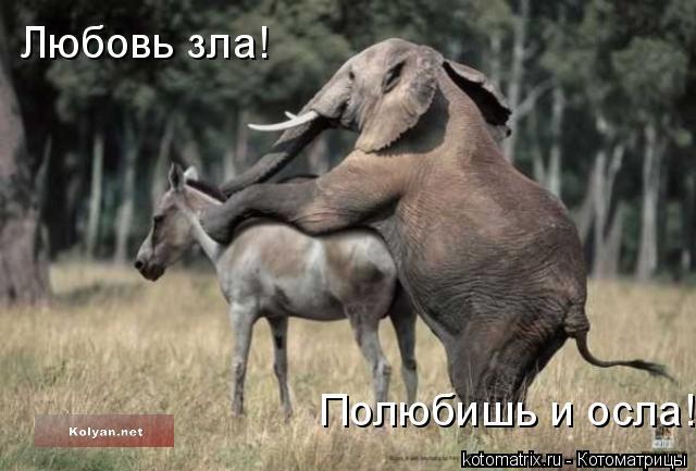 Котоматрица: Любовь зла! Полюбишь и осла!