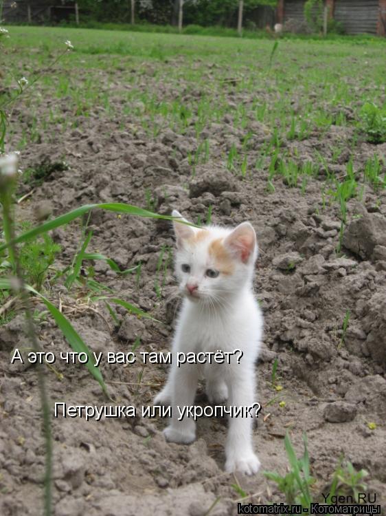 Котоматрица: А это что у вас там растёт? Петрушка или укропчик?