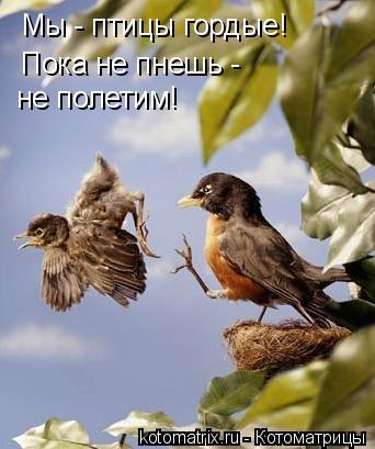 Котоматрица: Мы - птицы гордые! Пока не пнешь -  не полетим!