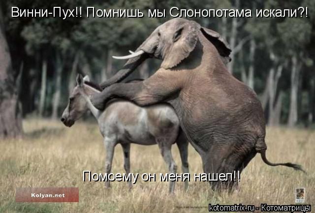 Котоматрица: Винни-Пух!! Помнишь мы Слонопотама искали?!  Помоему он меня нашел!!