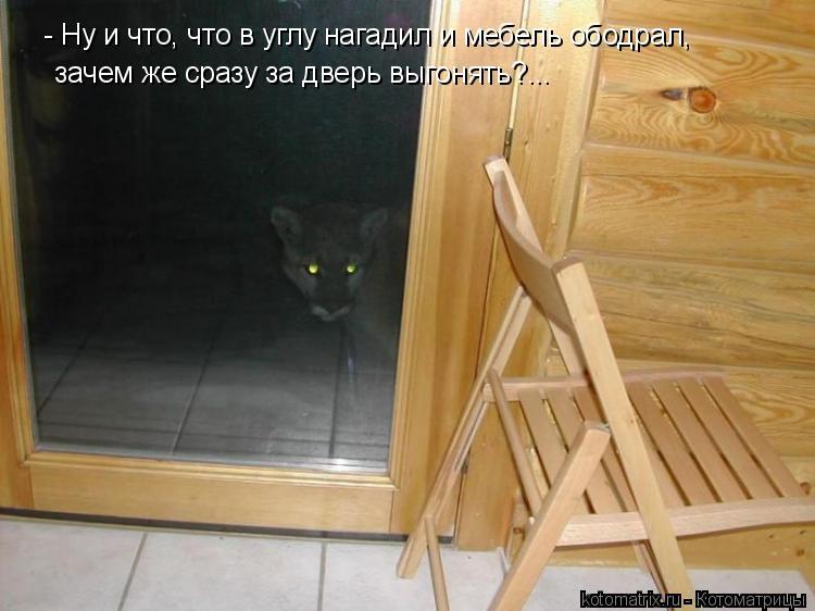 Котоматрица: - Ну и что, что в углу нагадил и мебель ободрал, зачем же сразу за дверь выгонять?...