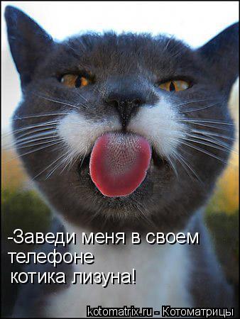 Котоматрица: -Заведи меня в своем  телефоне котика лизуна!