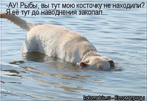 Котоматрица: -АУ! Рыбы, вы тут мою косточку не находили? Я её тут до наводнения закопал...