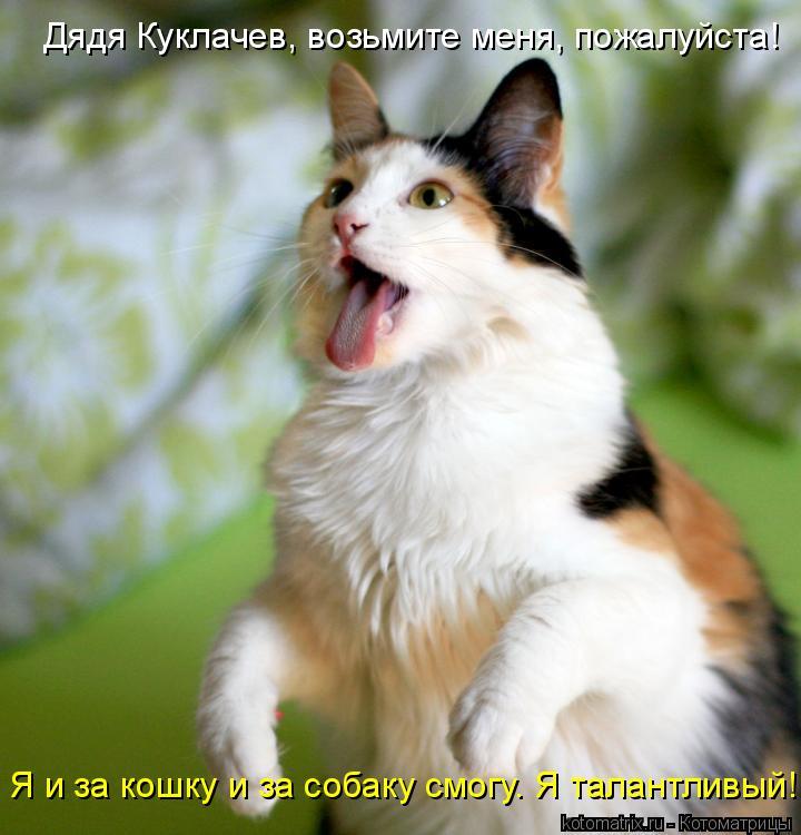 Котоматрица: Дядя Куклачев, возьмите меня, пожалуйста! Я и за кошку и за собаку смогу. Я талантливый!