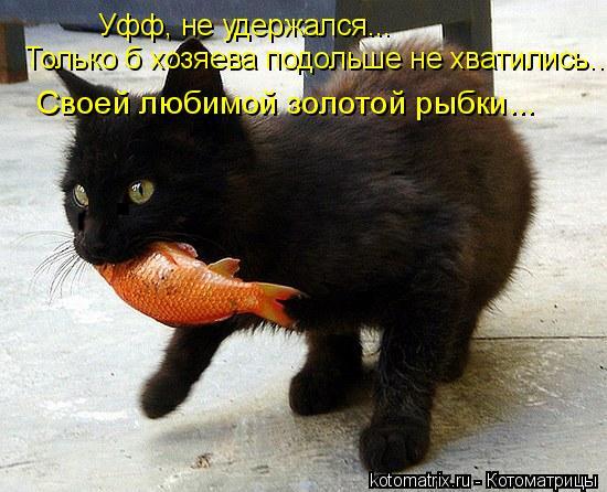 Котоматрица: Уфф, не удержался... Только б хозяева подольше не хватились... Своей любимой золотой рыбки...