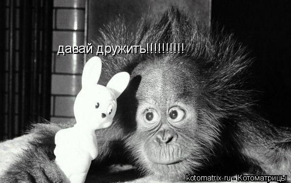 Котоматрица: давай дружить!!!!!!!!!!