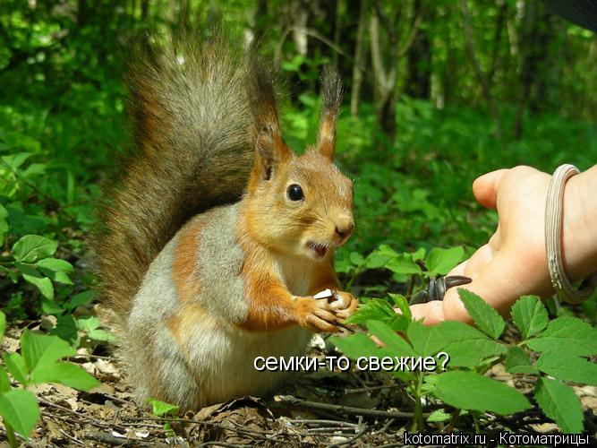 Котоматрица: семки-то свежие?