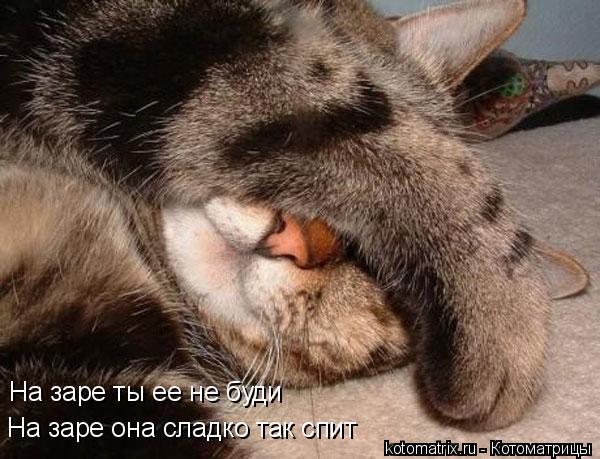 Котоматрица: На заре ты ее не буди На заре она сладко так спит