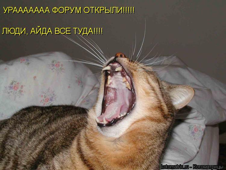 Котоматрица: УРААААААА ФОРУМ ОТКРЫЛИ!!!!! ЛЮДИ, АЙДА ВСЕ ТУДА!!!!