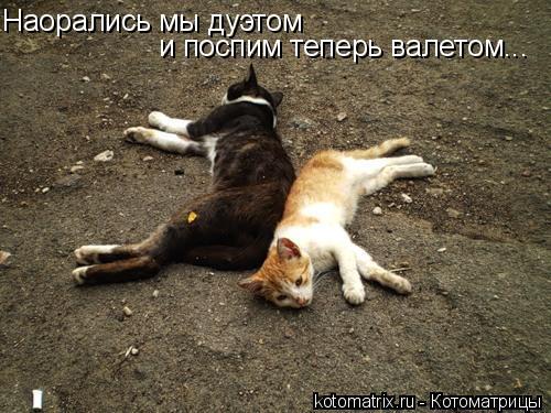 Котоматрица: Наорались мы дуэтом и поспим теперь валетом...
