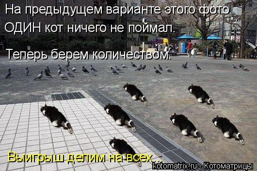 Котоматрица: Выигрыш делим на всех... Теперь берем количеством. На предыдущем варианте этого фото ОДИН кот ничего не поймал.