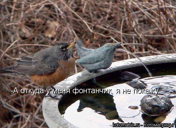 Котоматрица: -А откуда у меня фонтанчик, я не покажу.