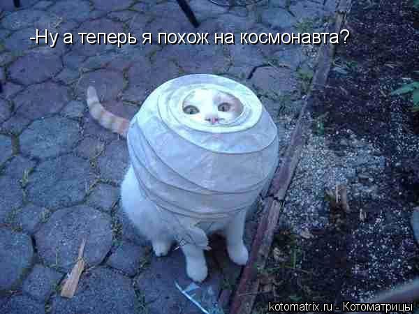 Котоматрица: -Ну а теперь я похож на космонавта?