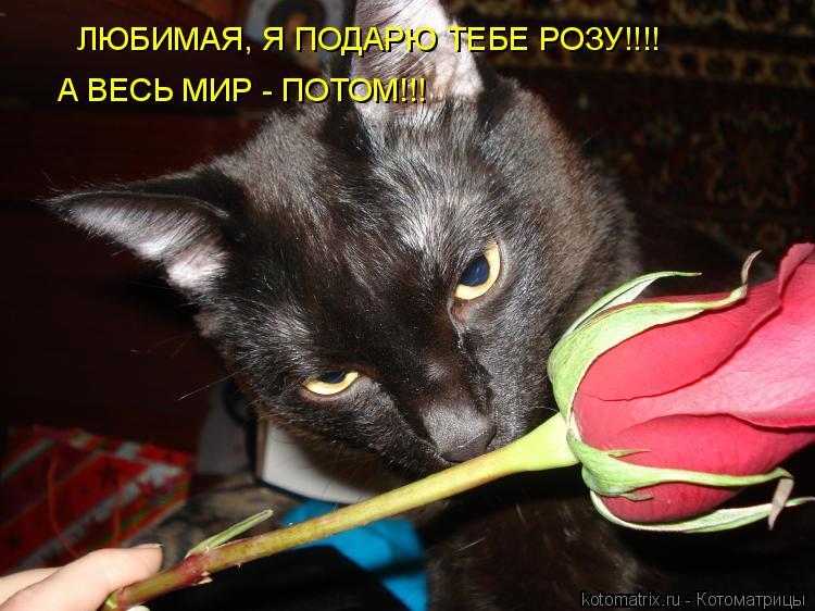 Котоматрица: ЛЮБИМАЯ, Я ПОДАРЮ ТЕБЕ РОЗУ!!!! А ВЕСЬ МИР - ПОТОМ!!!