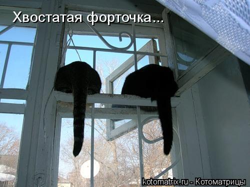 Котоматрица: Хвостатая форточка...