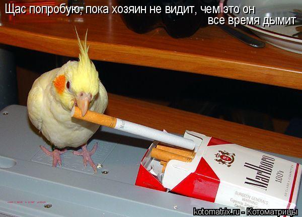 Котоматрица: Щас попробую, пока хозяин не видит, чем это он  все время дымит