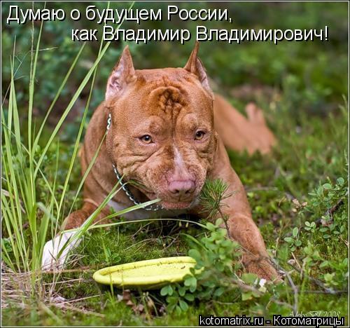 Котоматрица: Думаю о будущем России, как Владимир Владимирович!