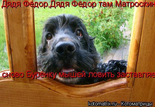 Котоматрица: Дядя Фёдор,Дядя Фёдор там Матроскин сново Бурёнку мышей ловить заставляет......