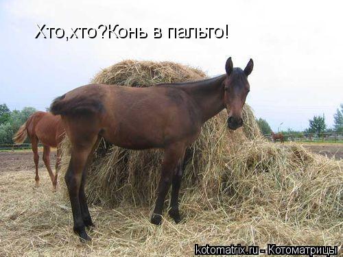 Котоматрица: Хто,хто?Конь в пальто!