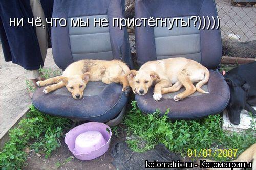 Котоматрица: ни чё,что мы не пристёгнуты?)))))