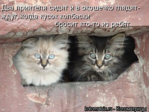 Котоматрица: Два приятеля сидят и в окошечко глядят- ждут, когда кусок колбаски  бросит кто-то из ребят...